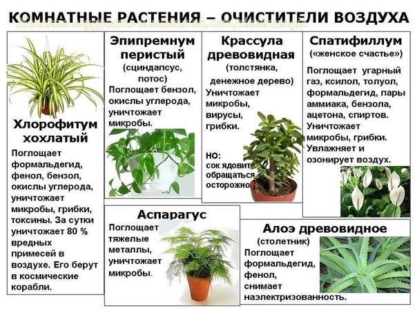 Какое лучше выбрать комнатное растение